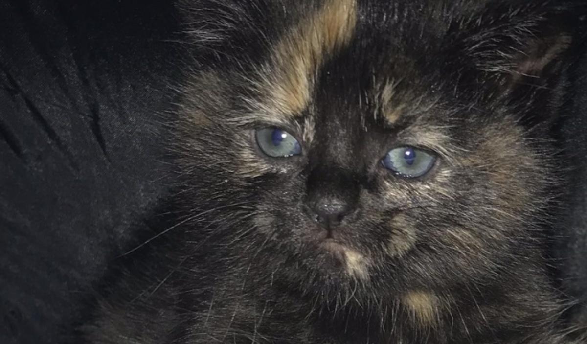 Il salvataggio di tre gattini