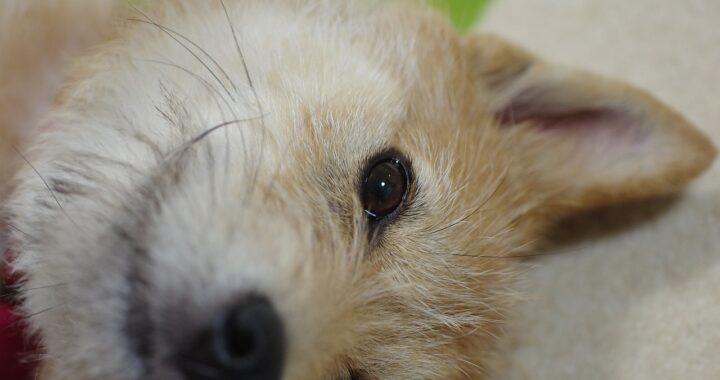 uomo salva la vita a un cane