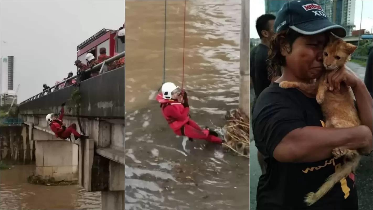 Pompieri salvano il micio
