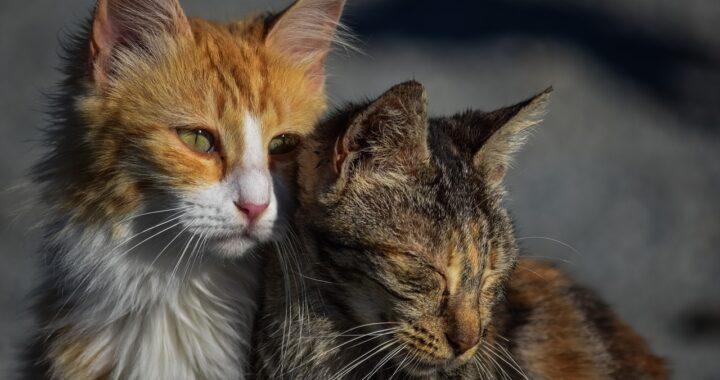 500 animali randagi da curare: ogni mese una donna spende più di 6mila euro per loro