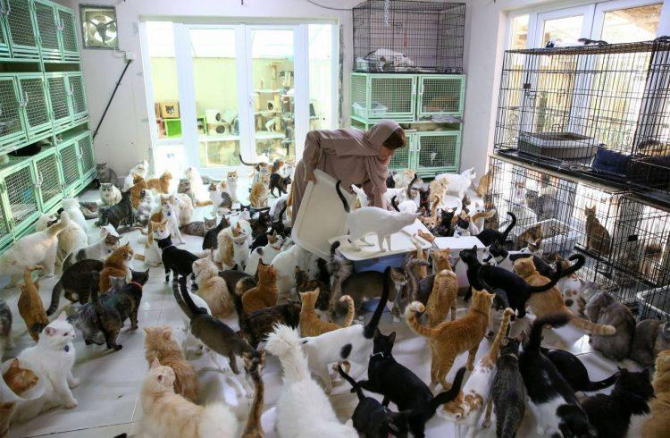 La colonia con 500 tra mici e cani
