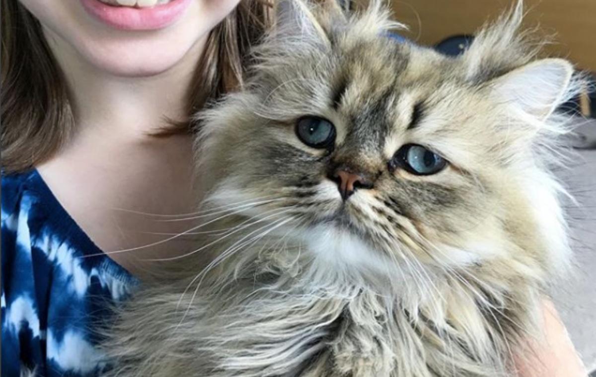 Barnaby, il gatto spettinato con gli occhi strabici