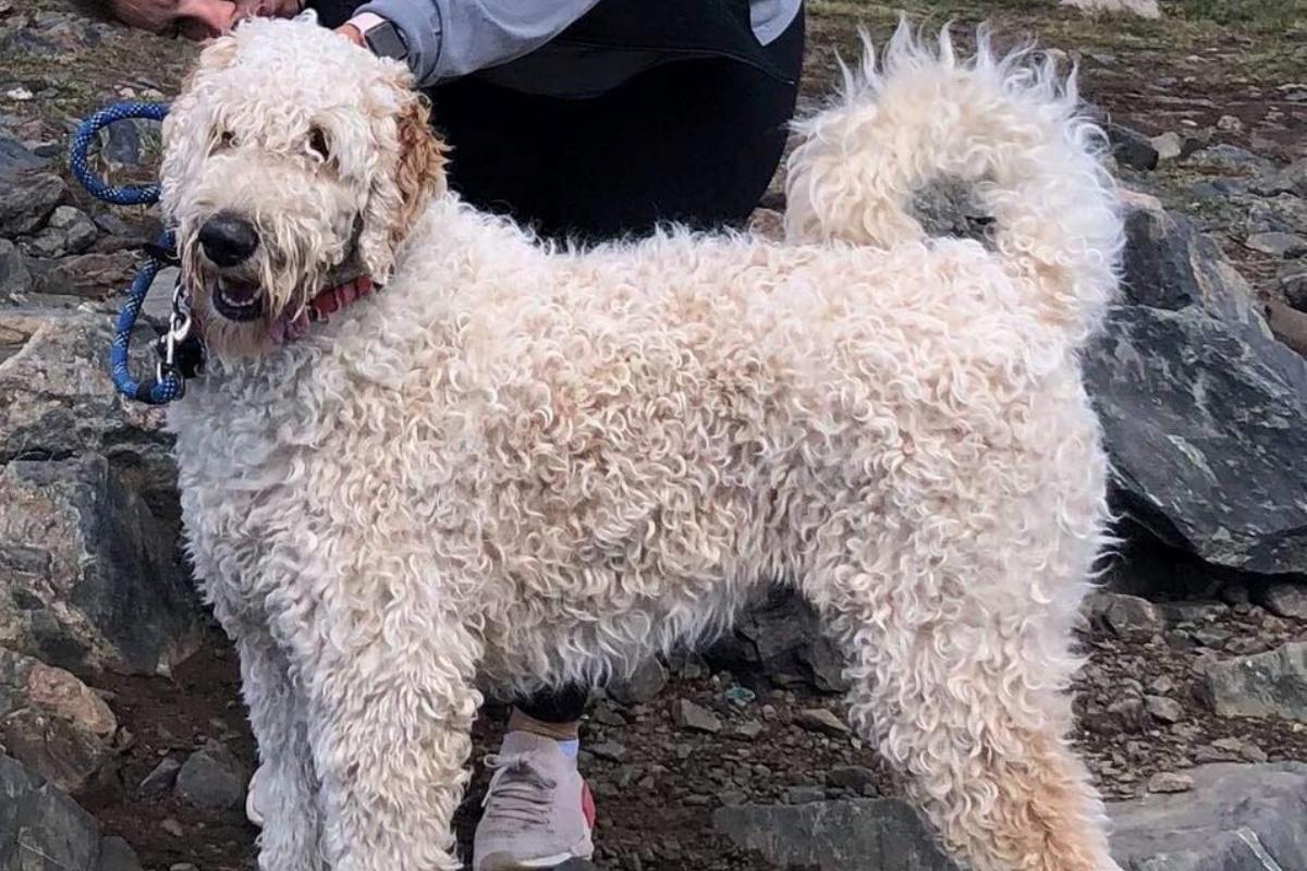 Bentley, il cagnolino disperso sulle colline del Colorado