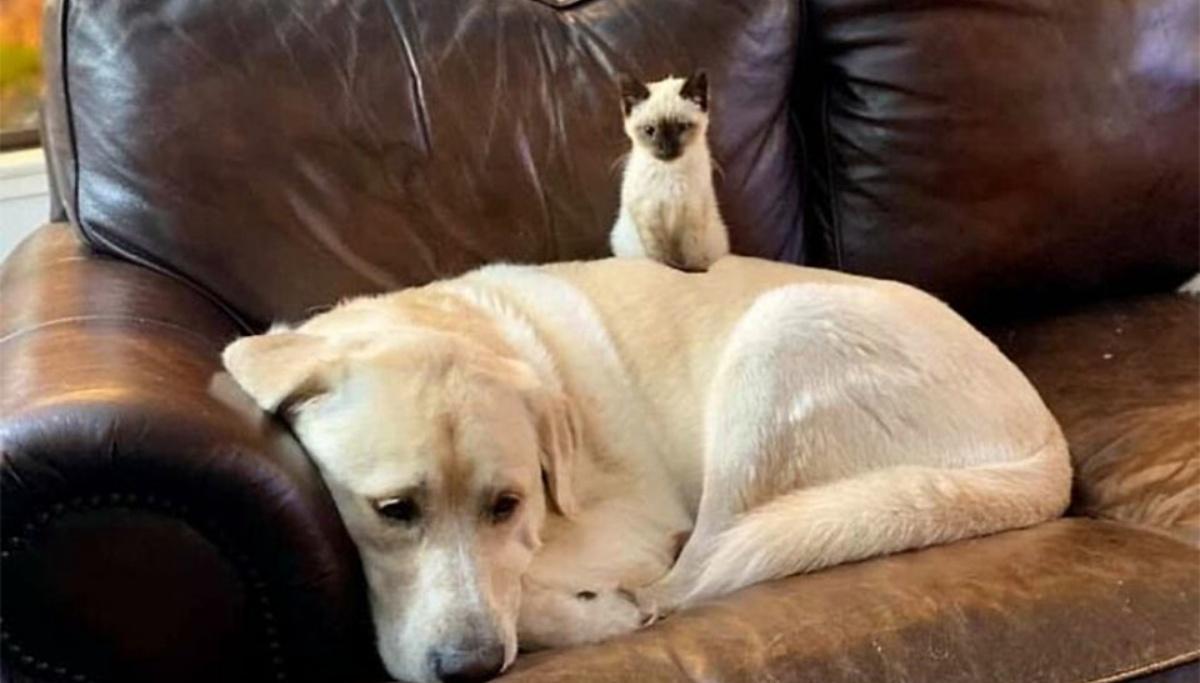 La storia della gatta Betty