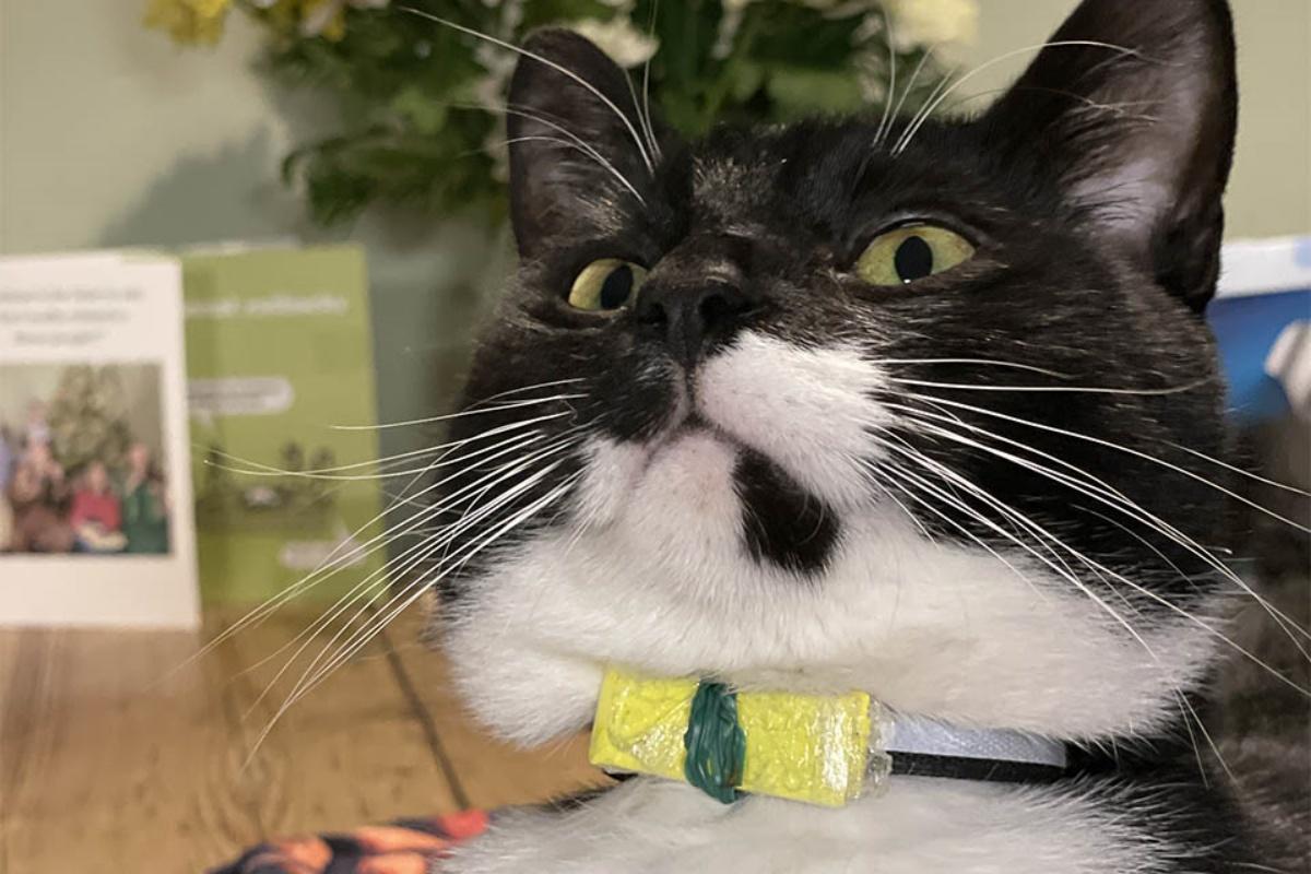 Billy, il gatto portalettere