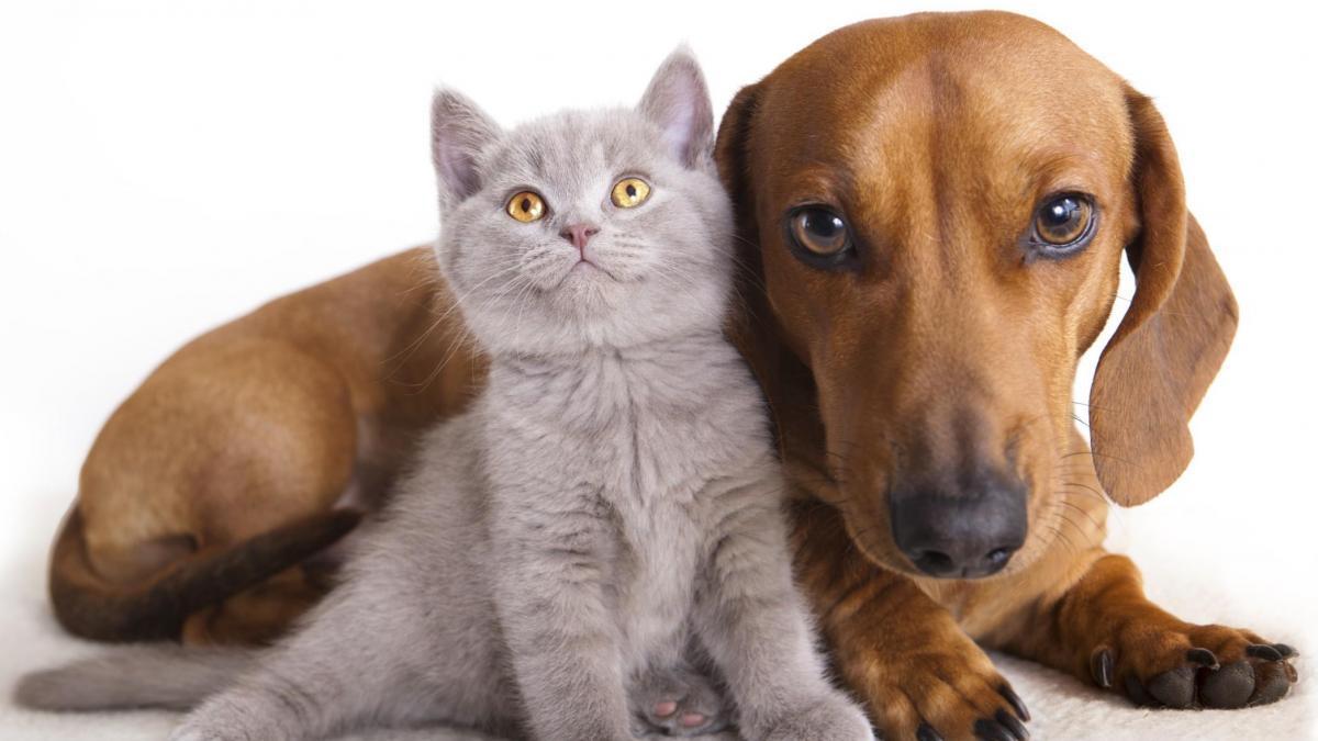 Bonus 2021 gatto e cane