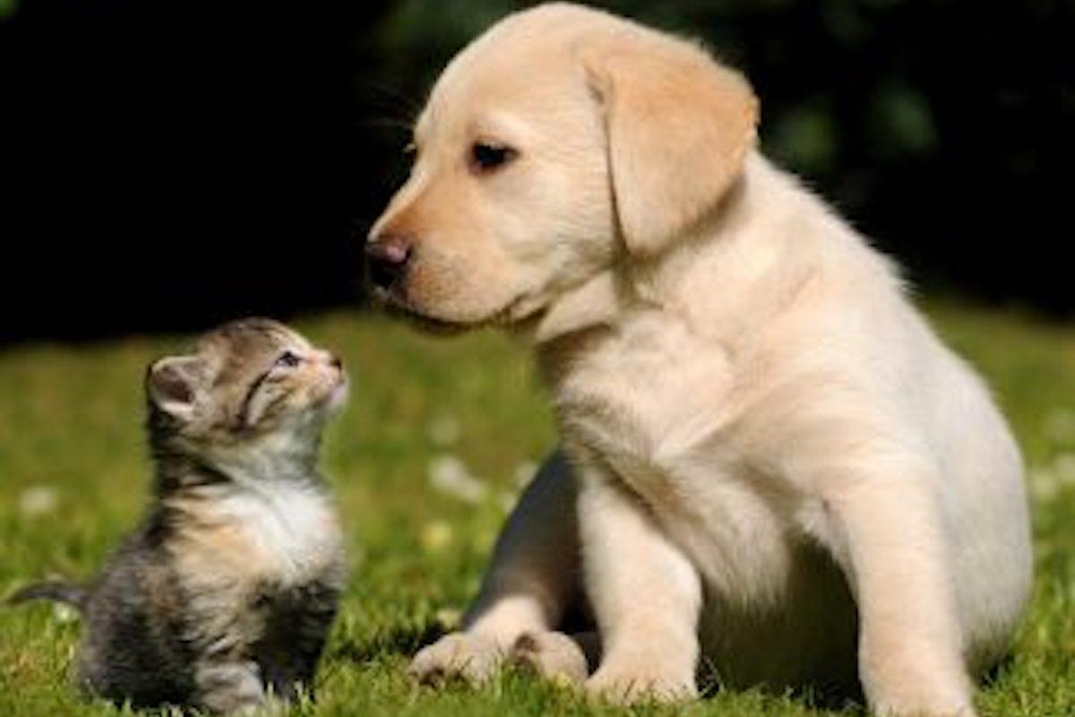 Cuccioli si guardano