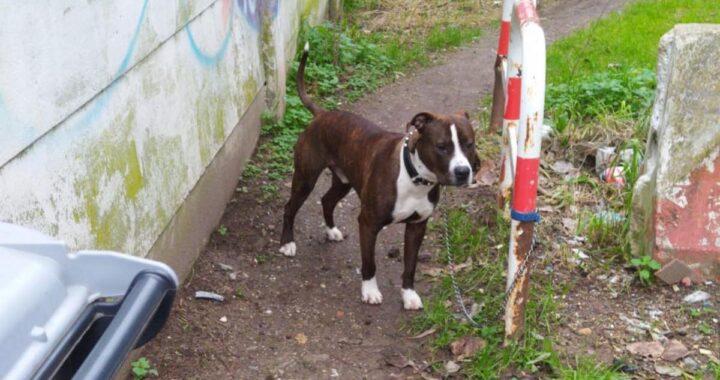 Attaccato cane ad un palo