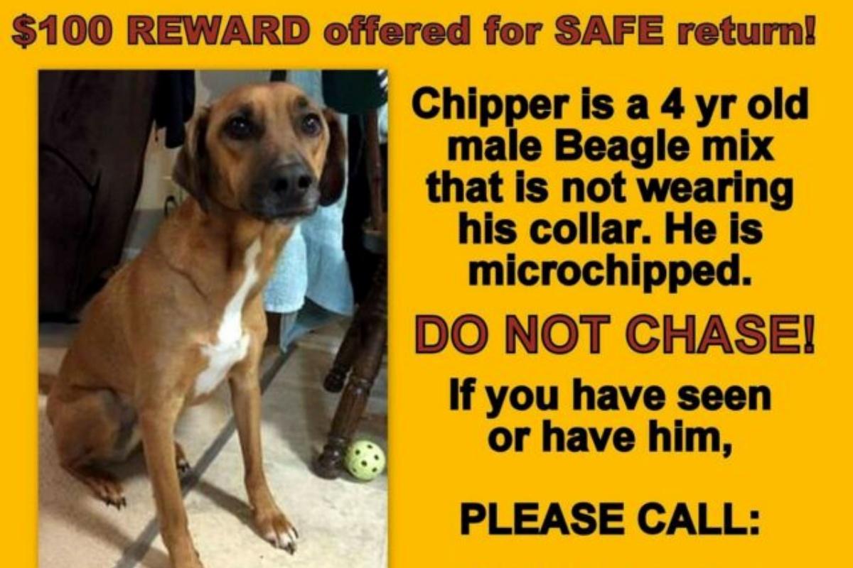 La sparizione e il ritrovamento del cane Chipper