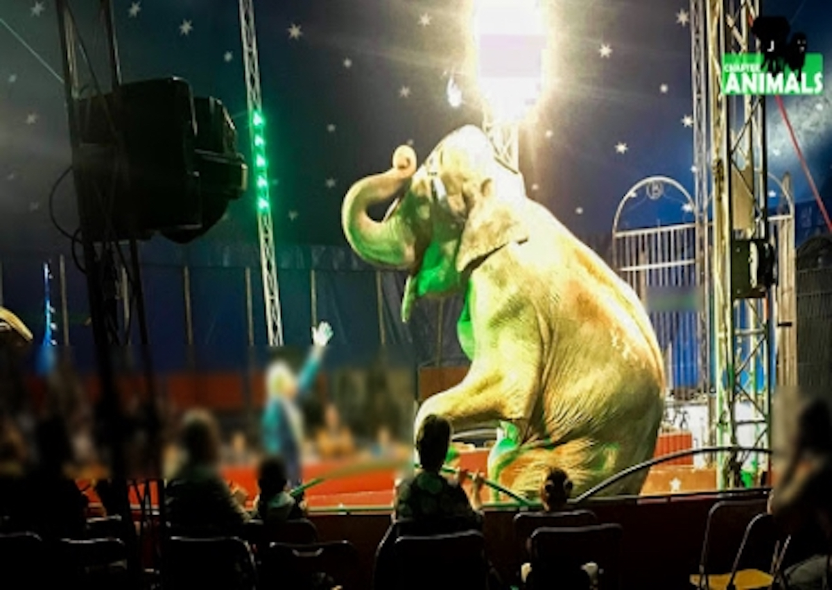 Dumba si esibisce davanti al pubblico