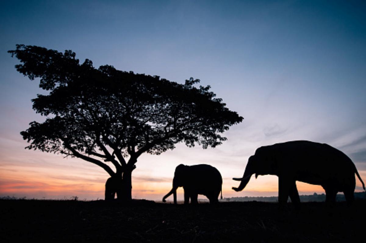 India: elefante ucciso da tre abitanti