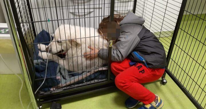 La foto del bambino Gioele e della cagnolina Wilma