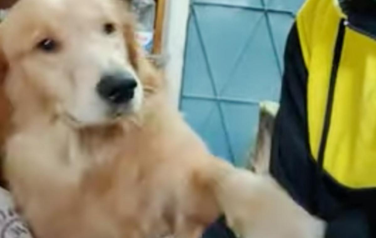 Il video del Golden Retriever