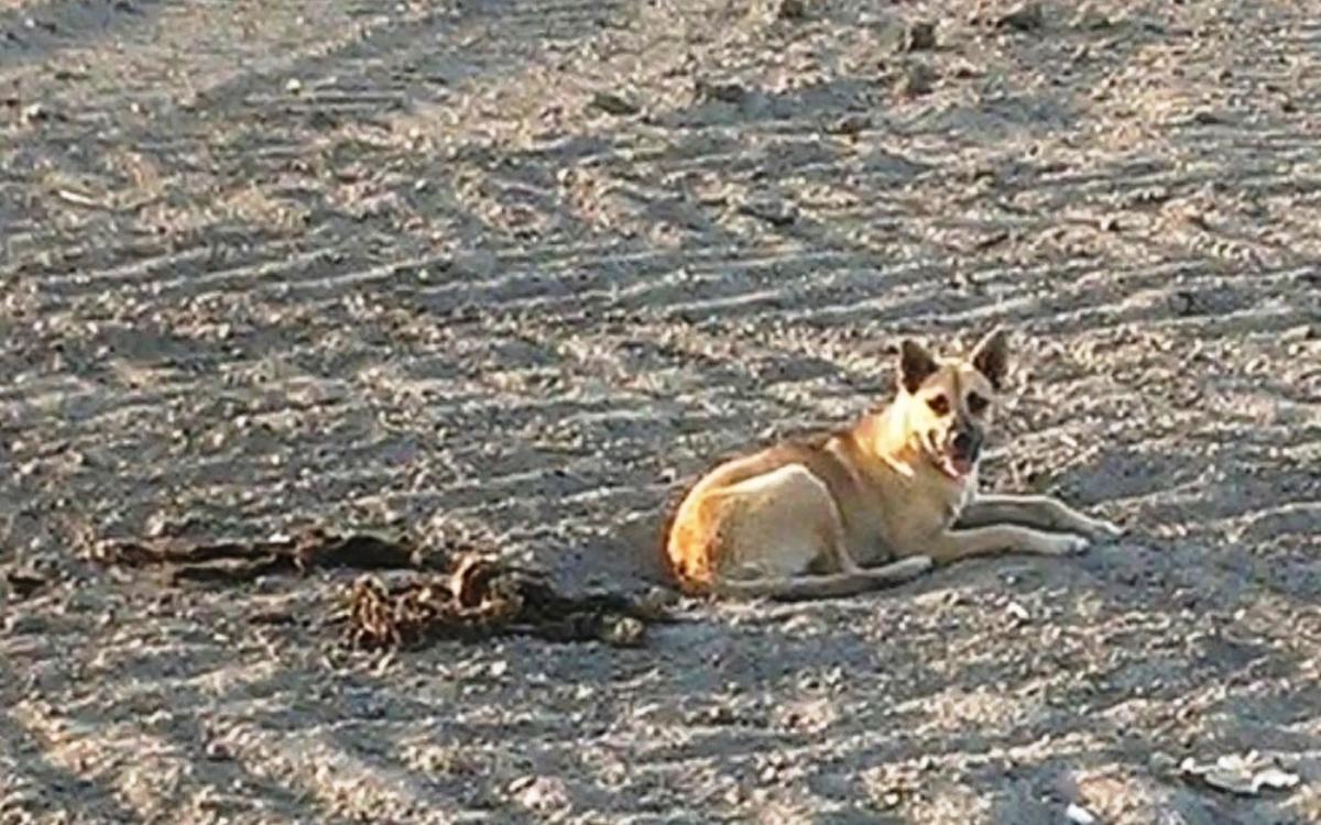 La triste storia della cagnolina Hachika