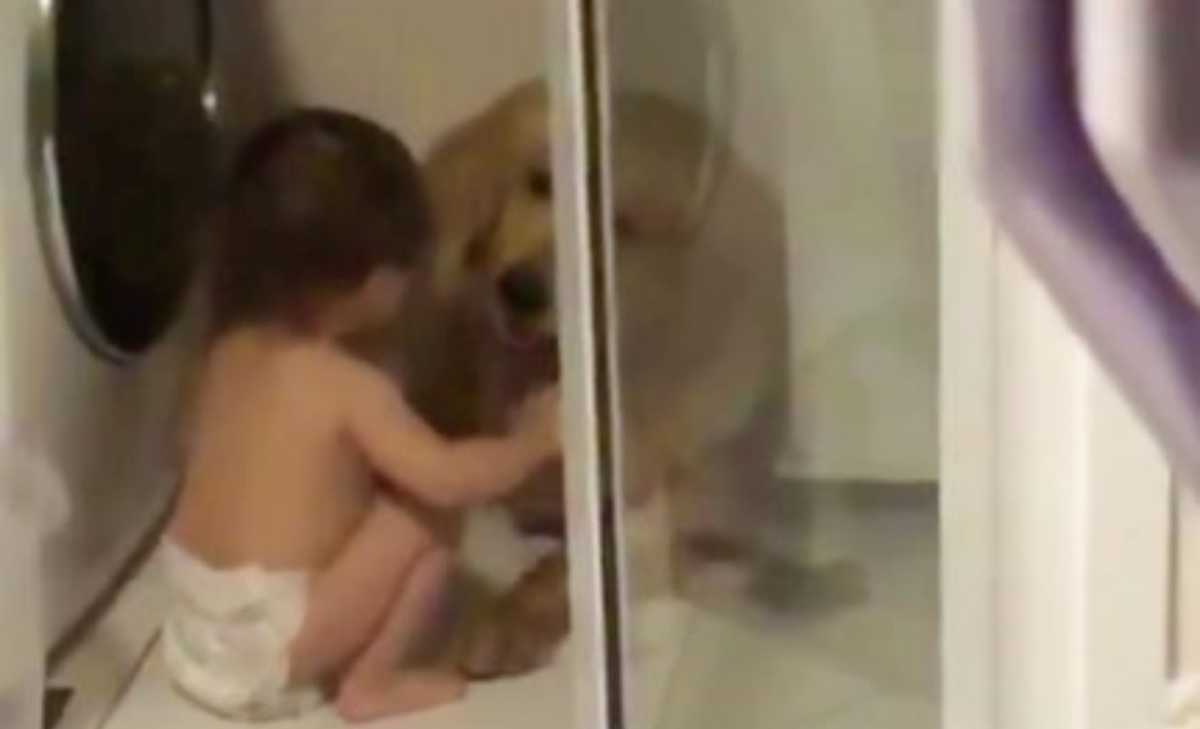 Il video del Golden Retriever e del bambino