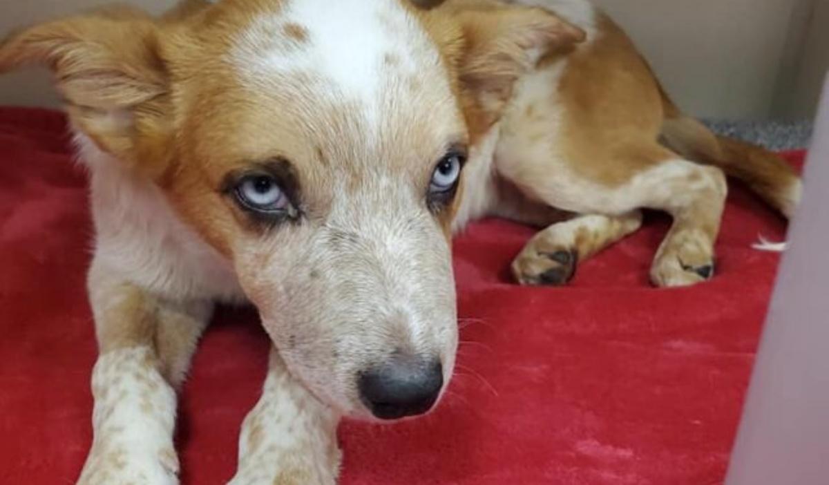 Lux, il cane maltrattato
