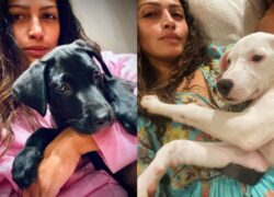 Due cuccioli salvati da Matthew McConaughey e Camilla Alves