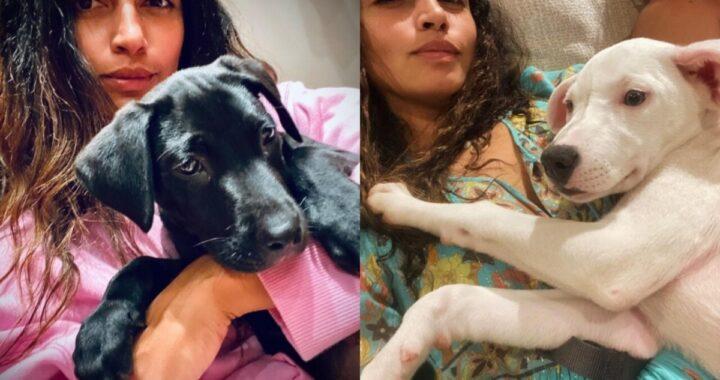 Il famoso attore e sua moglie intervengono in aiuto di due cani bisognosi: le tenere immagini su Instagram