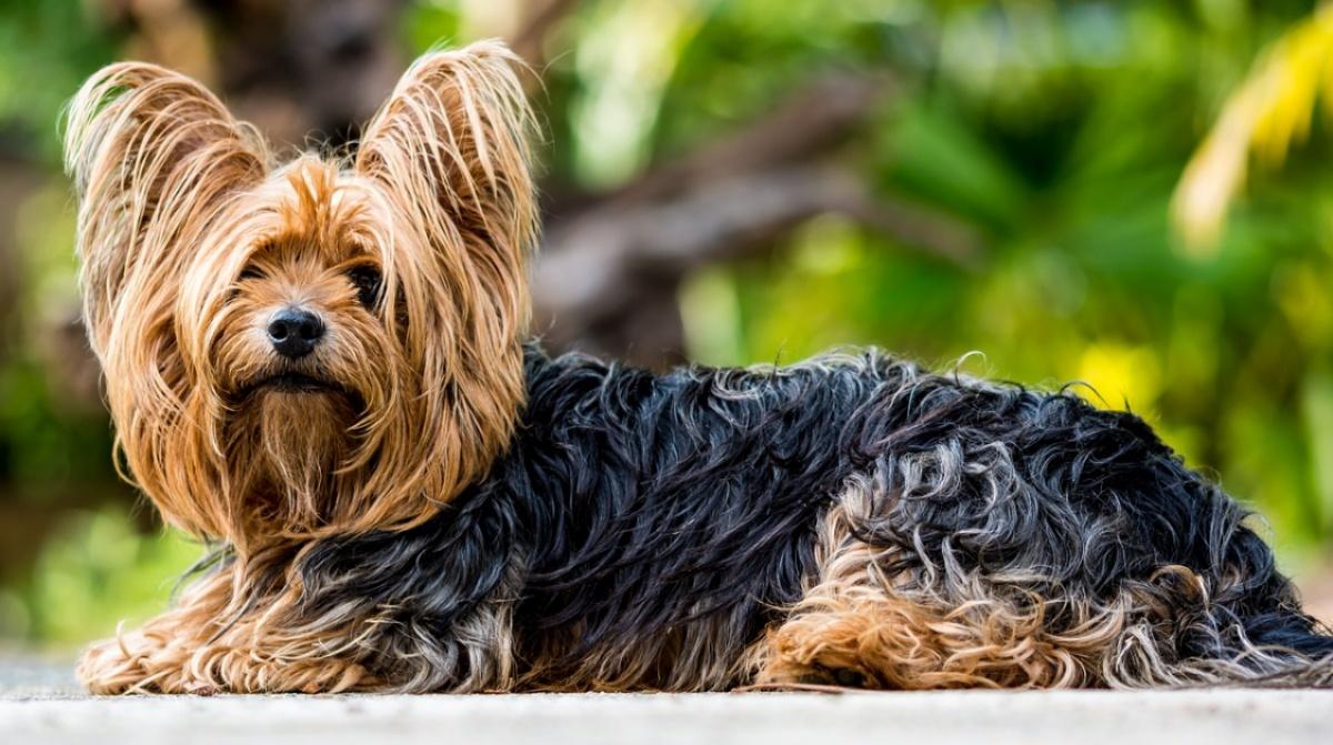 La storia della cagnolina Mila