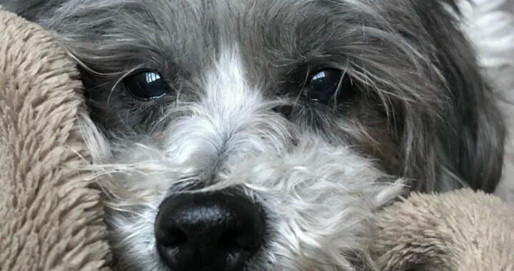 È morta Peggy: lo straziante post d'addio della sua mamma
