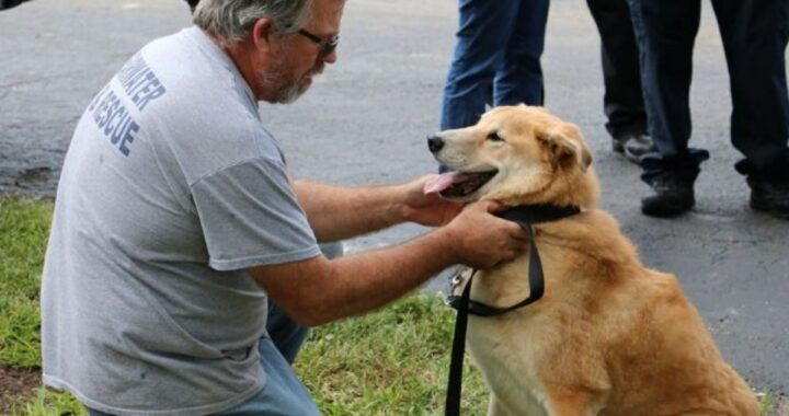 Addio ad un altro cane eroe. La sua famiglia ha deciso di farlo addormentare. L'ultimo commovente gesto dei suoi colleghi pompieri