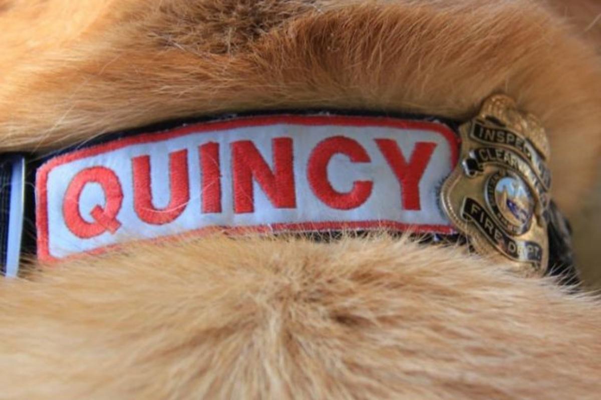 L'addio speciale dei pompieri al loro collega Quincy