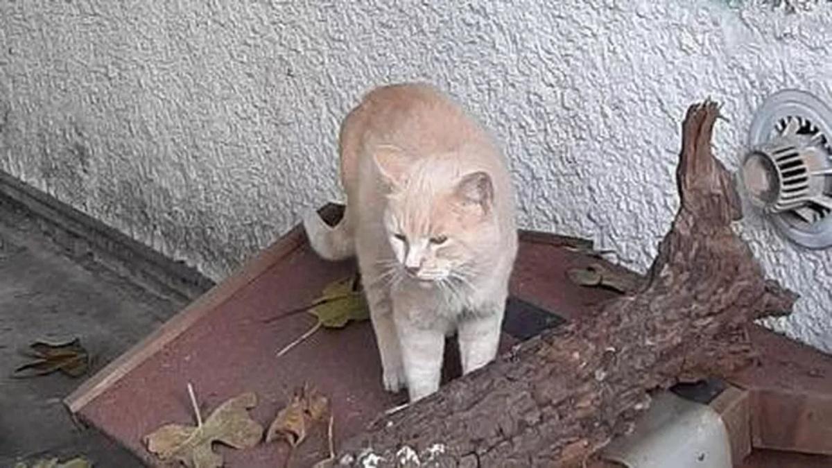 Morto il gatto Rosy