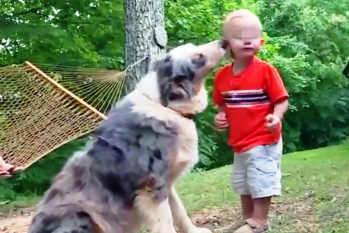 Il cane Shiloh salva il suo padroncino