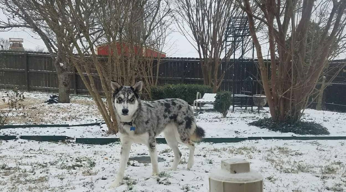 Wilson, il cagnolino che ama solo il freddo