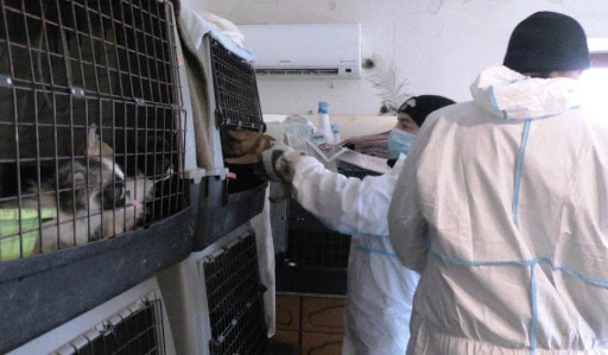 Sequestrato allevamento in provincia di Ancona