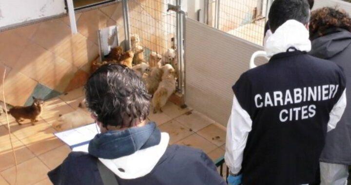 ANCONA - Orrore in un allevamento, individuato un focolaio di Brucella canis: i Carabinieri lanciano l'allarme. Ecco cosa dovete fare