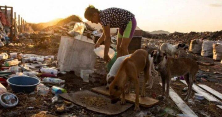 La donna è stata vista più volte avvicinandosi agli animali randagi nella discarica. Cosa faceva