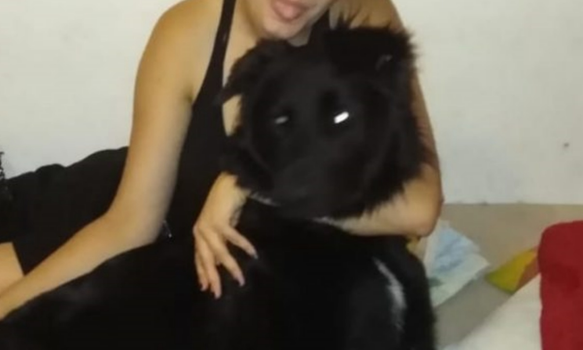 Anubi, il cane investito