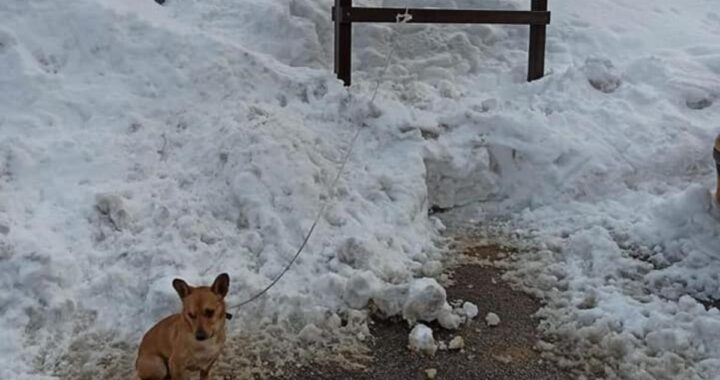 Cagnetto minuscolo abbandonato legato nella neve a -3°. Nella notte le temperature sarebbero scese fino a -13° ma un passante si è accorto di lui