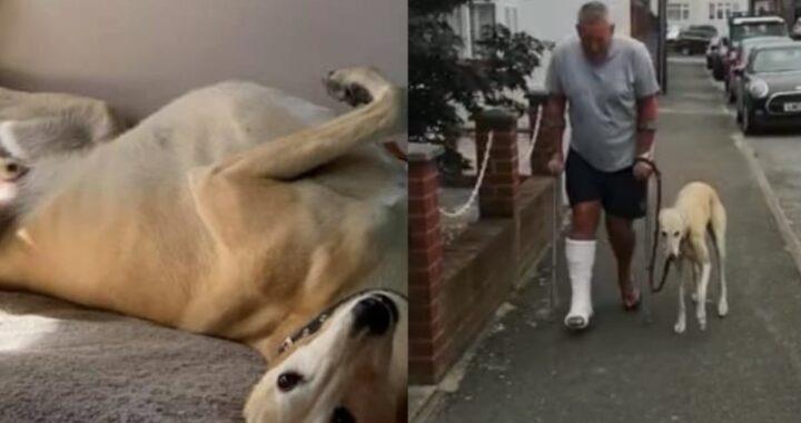 Uomo porta il suo cane Billy dal veterinario perché zoppicava, ma poco dopo scopre che lo stava solo copiando
