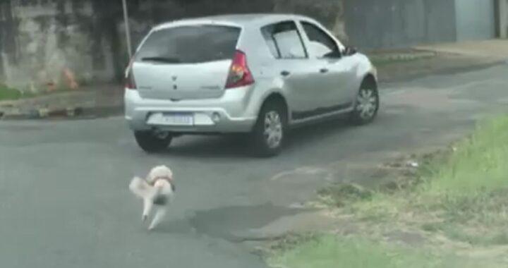 Cagnolina rincorre disperata la macchina dell'uomo che l'ha appena abbandonata. Il video condiviso da tutti ha cambiato la sua vita