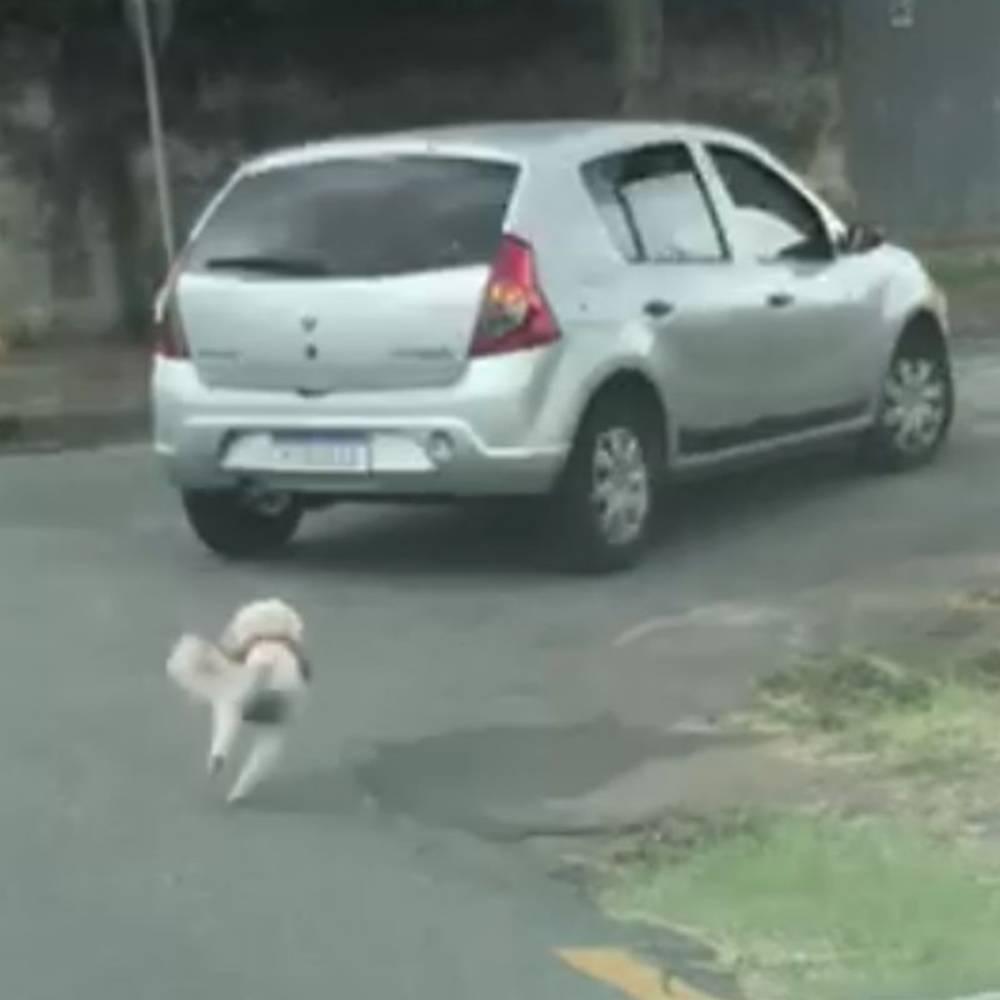 macchina inseguita ca cagnolina abbandonata