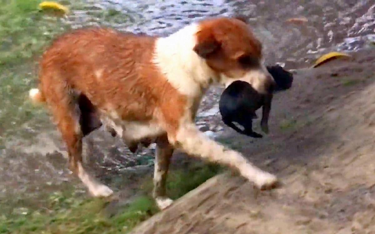 Cagnolina randagia salva i suoi cuccioli