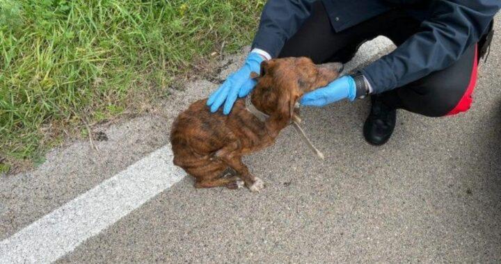 Cagnolino malato e denutrito trovato per strada dai Carabinieri: rintracciato il proprietario. Ecco quanto ha dichiarato