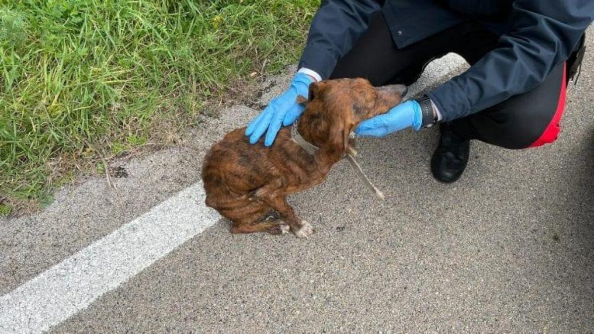 Carabinieri salvano un cagnolino abbandonato