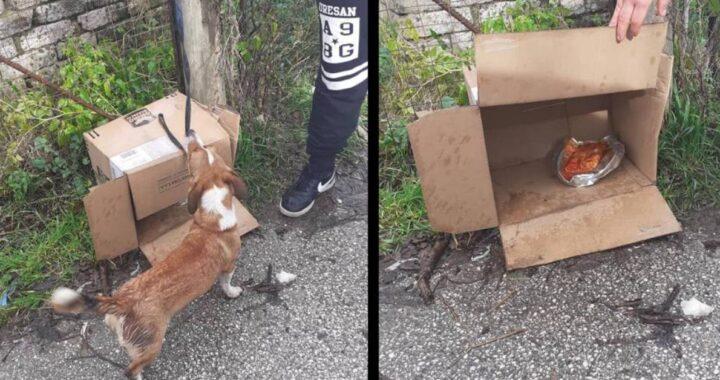 Cucciolo abbandonato legato a un palo in aperta campagna. Gli hanno lasciato una scatola come riparo dalla pioggia e dal freddo e una ciotola di pappa