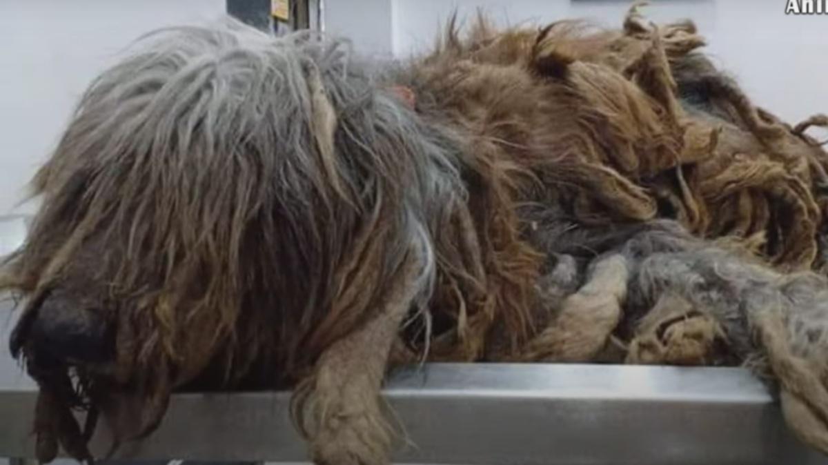 Cane abbandonato in una casa vuota