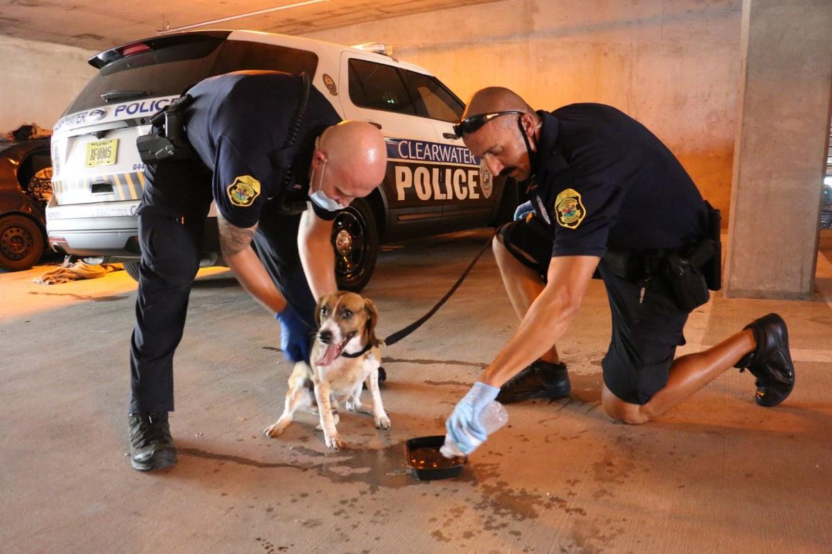 cane agenti