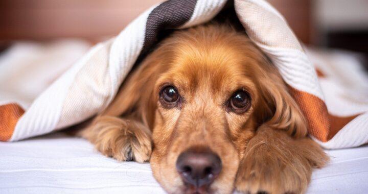 cane aiuta gli anziani