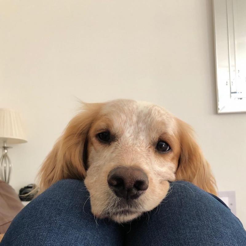 Ted il cucciolo rapito
