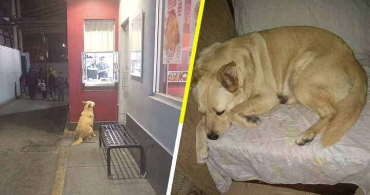 Cane si presenta ogni sera davanti alla finestra del fast food per chiedere la cena: il gesto dei dipendenti