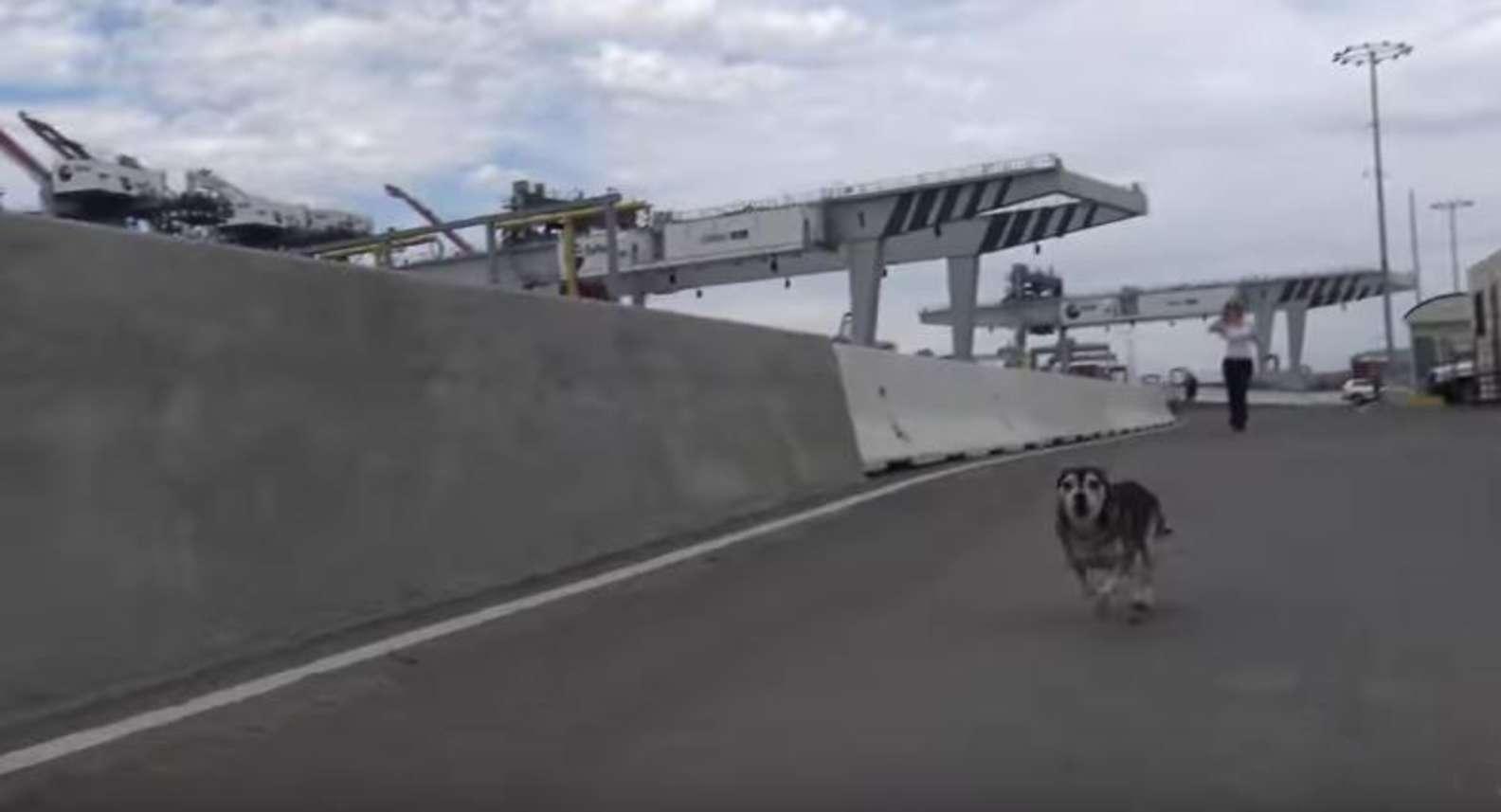 Houdini il cane che vive al porto
