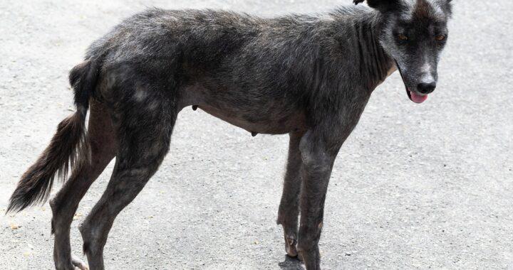 cane magrissimo, pelle e ossa e malato