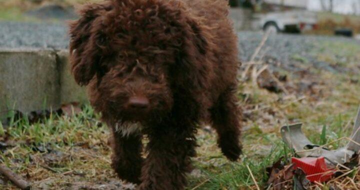 Un altro cane morto folgorato, è il sesto in pochi giorni. Lo straziante racconto del suo proprietario