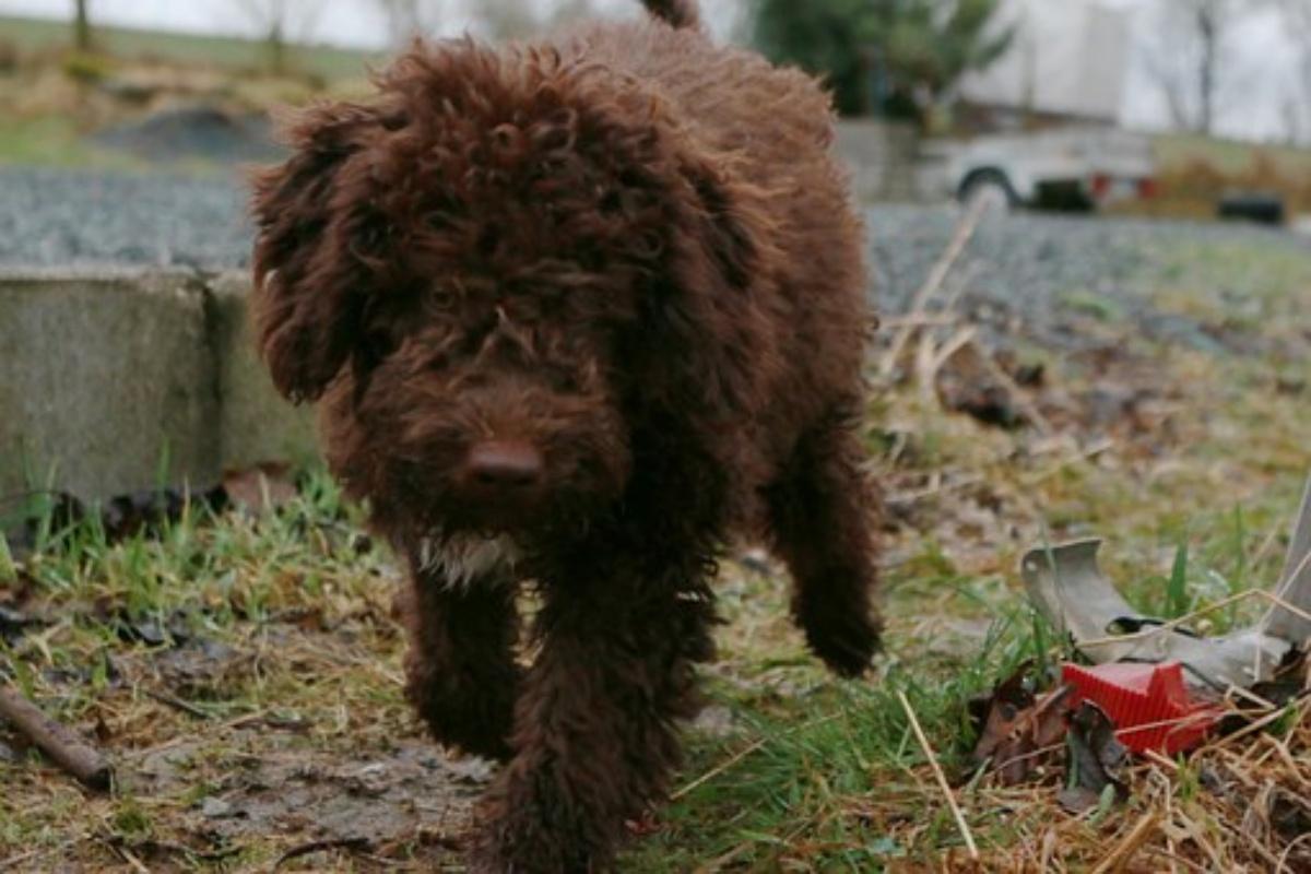 Morto folgorato un cane a Milano